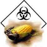 monsanto-toxic